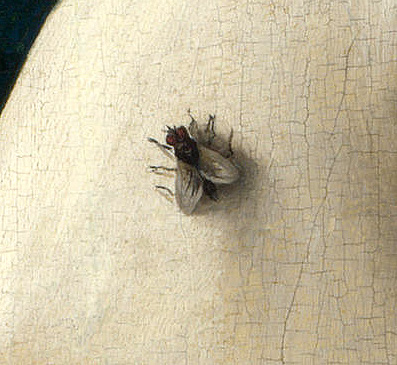 mosca-giotto